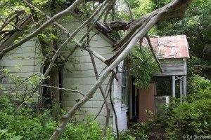 housewoods-4